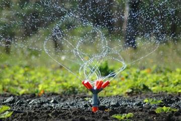 Weed Control & Fertilization